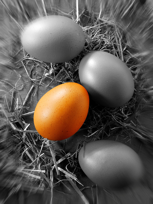 different coloured egg in a tray of eggs.