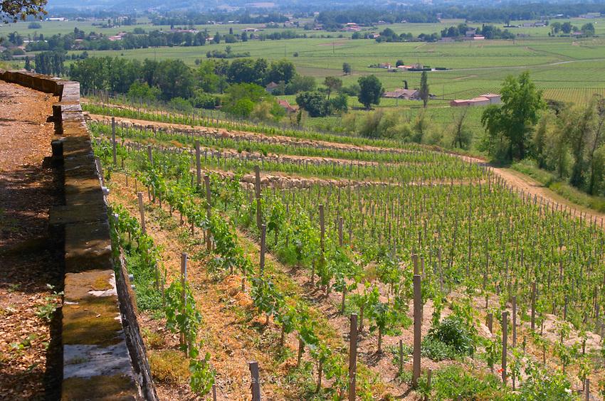 A view over the vineyards that are terraced which is very unusual in Bordeaux Chateau de Pressac St Etienne de Lisse Saint Emilion Bordeaux Gironde Aquitaine France