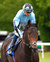 Strict ridden by David Probert goes down to the start of The Wilton Homes Novice Stakes during Evening Racing at Salisbury Racecourse on 11th June 2019