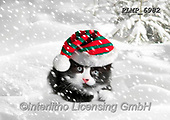Marek, CHRISTMAS ANIMALS, WEIHNACHTEN TIERE, NAVIDAD ANIMALES, photos+++++,PLMP6982,#xa# ,kittens,cats