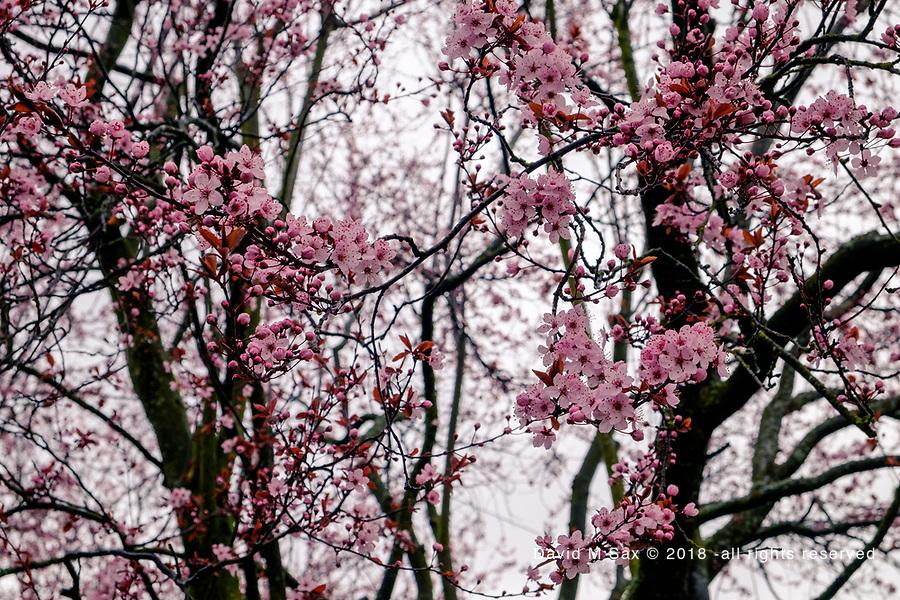 3.26.17 - In Bloom 1...