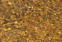 The river bed of rocks and pebbles in Service Creek near Yampa, Colorado