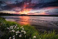 Summer Grass, Evening On The Henry's Fork Of The Snake River, Last Chance, Idaho