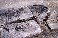 Zona arqueologica de Chichen Itza Zona arqueol&oacute;gica  <br /> Chich&eacute;n Itz&aacute;Chich&eacute;n Itz&aacute; maya: (Chich&eacute;n) Boca del pozo; <br /> de los (Itz&aacute;) brujos de agua. <br /> Es uno de los principales sitios arqueol&oacute;gicos de la <br /> pen&iacute;nsula de Yucat&aacute;n, en M&eacute;xico, ubicado en el municipio de Tinum.<br /> *Photo:*&copy;Francisco* Morales/DAMMPHOTO.COM/NORTEPHOTO<br /> * No * sale * a * third *