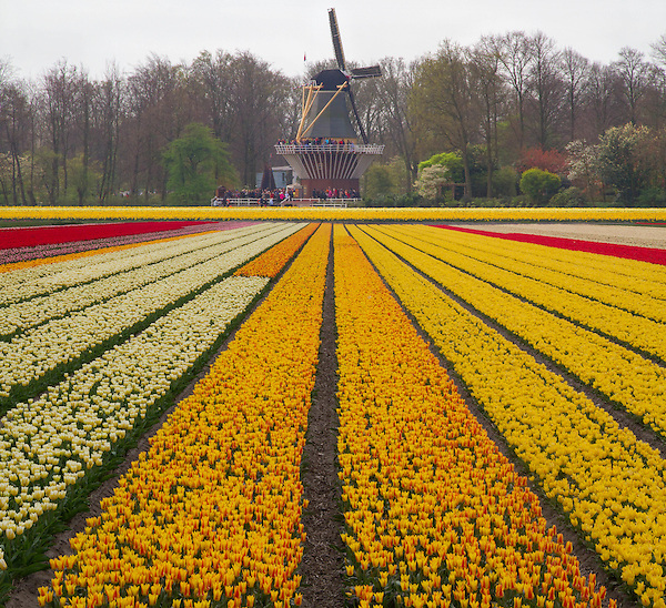 Netherlands, Keukenhof Gardens.  Kinds of Lines.<br />