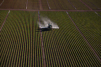 Applying Liquid Fertilizer on Crops, Southern Florida Agriculture