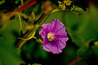 Bright Purple Flower