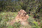 Termite mound, Ella, Badulla District, Uva Province, Sri Lanka, Asia