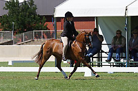 Child's Medium Hunter Pony