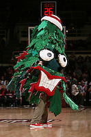 STANFORD, CA - FEBRUARY 1:  The Stanford Tree during Stanford's 68-51 win over the UCLA Bruins on February 1, 2009 at Maples Pavilion in Stanford, California.