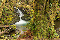 Falls Creek Falls in the Olympic National Forest, Washington