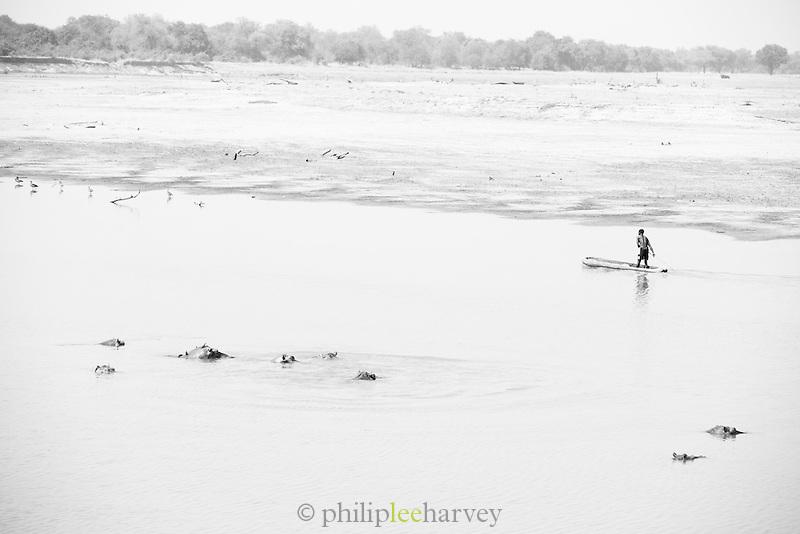 Man in dugout canoe with hippopotamus on the Luangwa River Valley Safari, Zambia, Africa