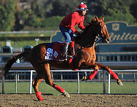 Old Time Hockey, trained by Tom Proctor, trains for the Breeders' Cup Marathon at Santa Anita Park in Arcadia, California on October 30, 2013.