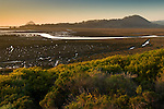 Sunset light on the Elfin Forest and the Morro Estuary Natural Preserve, near Los Osos and Morro Bay, California