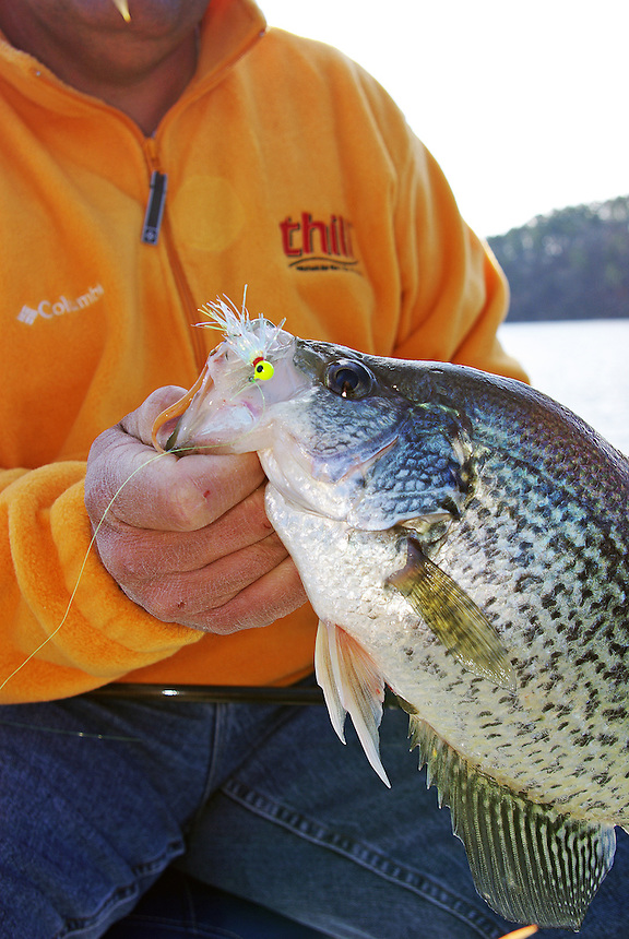 Crappie caught on a jig