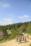 Israel, Lower Galilee, Cycling in Segev forest