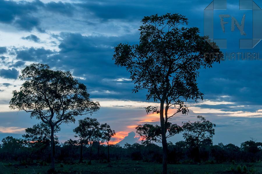 &Aacute;rvores em meio ao cerrado na Ilha do Bananal ao entardecer no entorno do Parque Nacional do Araguaia | Trees amid the brazilian savanna in the Bananal Island at evening in the surroundings of the Araguaia National Park<br /> <br /> LOCAL: Lagoa da Confus&atilde;o, Tocantins, Brasil<br /> DATE: 10/2010<br /> &copy;Pal&ecirc; Zuppani