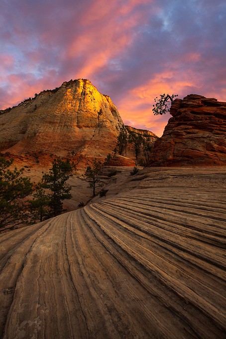 The iconic bonsai tree in Zion National Park perpetually perched atop a small ridge as another day passes.