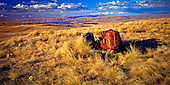 High on the tops of the Lammerlaw ranges, above the Clutha River valley, an old David Brown tractor is left to become derelict amongst the tussock grasses. Central Otago district, Otago region, South Island, New Zealand.