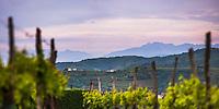 Vineyards and mountains near Smartno in the Goriska Brda win region of Slovenia, Europe