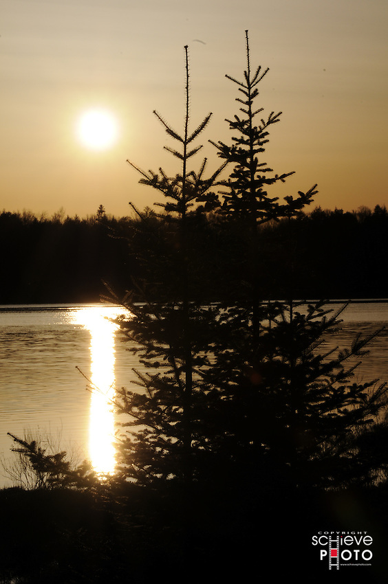 Sunset behind young evergreen trees on Spider Lake in northern Wisconsin.