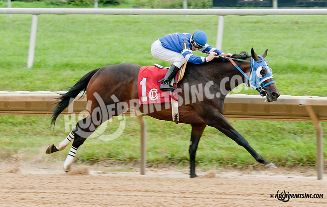 Lightly Wound winning at Delaware Park on 7/25/13