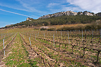 Vineyards below the mountains. Vines winter pruned in Cordon Royat Château Barbanau and Clos Val-Bruyere Cassis Cote d'Azur Var France