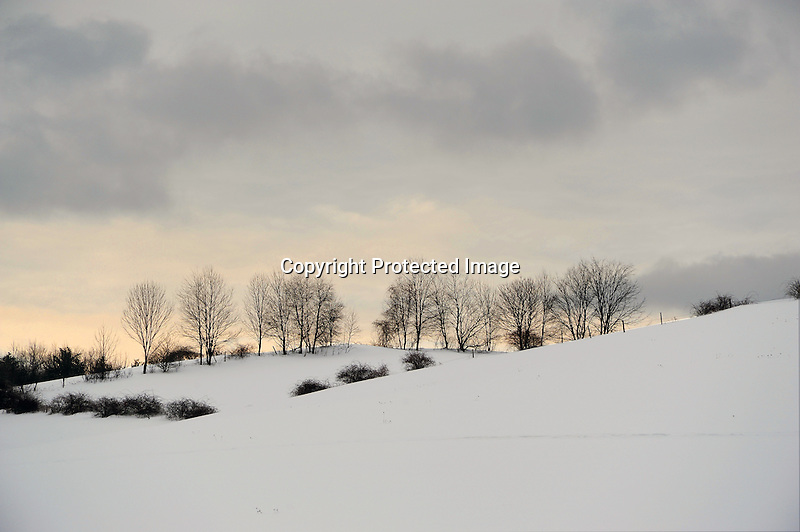 Winter Trees along a Snow Covered Hill Pasture in Afternoon Light in Rural Walpole, New Hampshire