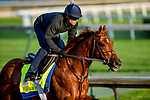 LOUISVILLE, KENTUCKY - APRIL 29: Plus Que Parfait, trained by Brendan Walsh, exercises in preparation for the Kentucky Derby at Churchill Downs in Louisville, Kentucky on April 29, 2019. John Voorhees/Eclipse Sportswire/CSM