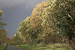Dramatic lighting in autumn woodland trees as storm approaches, Dunwich, Suffolk, England