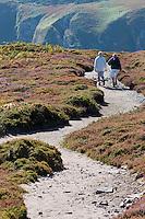 France, Côtes-d'Armor (22), Côte d'Emeraude, Plévenon,  Cap Frehel,  Lande de bruyères et d' ajoncs et Cap Fréhel  randonnée pédestre// / France, Brittany, Cotes-D'Armor,  Emeraude coast , Cap Frehel,  Moorland and gorse  Cap Frehel, hiking