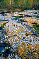 Lichen covered basalt<br />