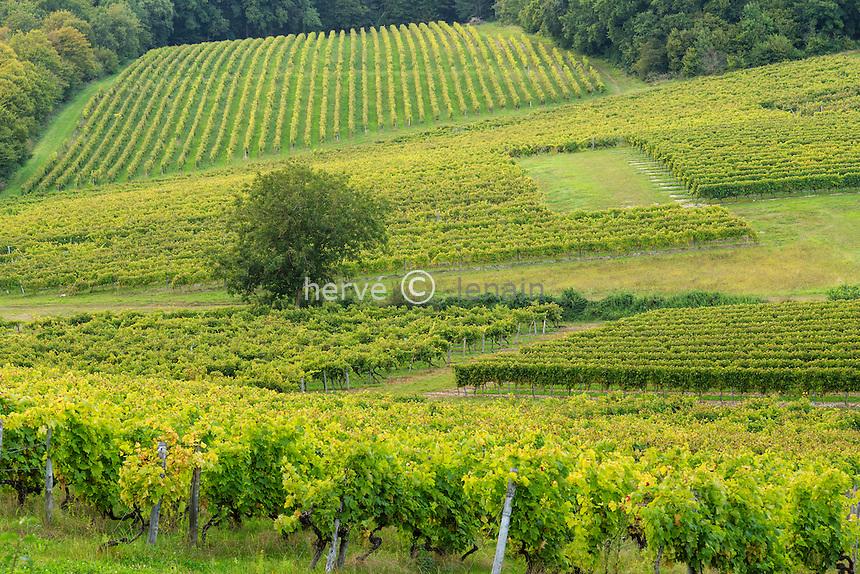 France, Charente (16), Malaville, vignoble de Cognac // France, Charente, Malaville, Cognac vineyard