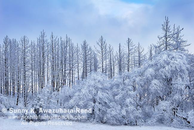 """Winter Illusion - Cuyamaca, California"".Cuyamaca Rancho State Park, California"