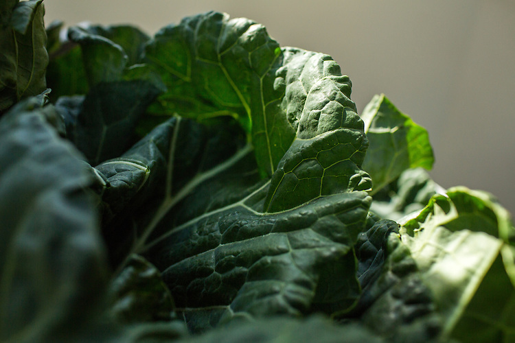 Hillsborough, North Carolina - Friday November 13, 2015 - Collard Greens for the Collard Kraut in April McGregor's kitchen in Hillsborough, NC.