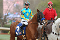 HOT SPRINGS, AR - MARCH 17: Solomini #3 with jockey Prat Flavien aboard before the running of the Rebel Stakes at Oaklawn Park on March 19, 2018 in Hot Springs, Arkansas. (Photo by Justin Manning/Eclipse Sportswire/Getty Images)