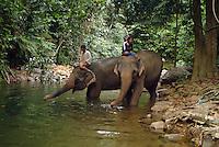 Mahouts helping elephants to take a bath.