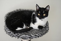 BOGOTÁ-COLOMBIA-  Gato doméstico./ Domestic cat. Photo: VizzorImage/STR