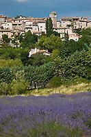 Europe/France/Provence-Alpes-Côte d'Azur/84/Vaucluse/Lubéron/Saignon: Le village et champ de lavande