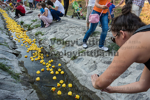 Woman photographs a thousand rubber ducks float on a creek during a charity race of the Rotary Club in Szentendre (about 20 km North of the capital city Budapest), Hungary on August 31, 2013. ATTILA VOLGYI