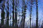Water reflections, Washington Park Arboretum, Seattle, Washington