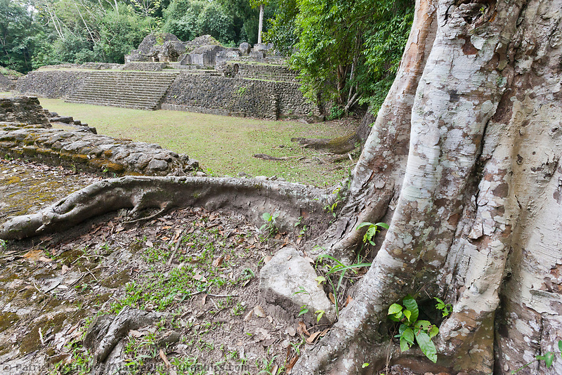 Ancient Mayan ruins of Carocol, Belize