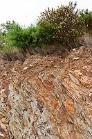 Flaky flakey rock soil schist slate. Domaine Boucabeille, Corneilla la Riviere, Roussillon, France