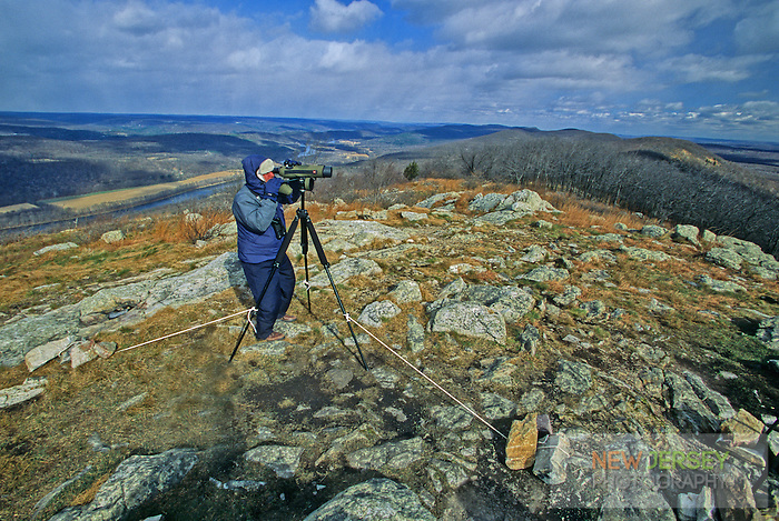 Birdwatcher, fall migration.  Racoon Ridge, Kittatinny Mountains, New Jersey