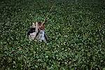 A Bangladeshi boat man struggles to make his way through a water hyacinth filled Buriganga River in Dhaka, Bangladesh.