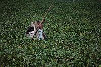 A Bangladeshi boat man struggles to make his way through a water hyacinth filled Buriganga River in Dhaka, Bangladesh.