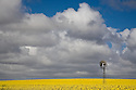 Canola Crops Eyre Peninsula South Australia