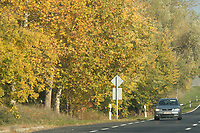 Car passes by trees on the roadside in Western Hungary (about 200 kilometres west of capital city Budapest), Hungary on Oct. 19, 2017. ATTILA VOLGYI