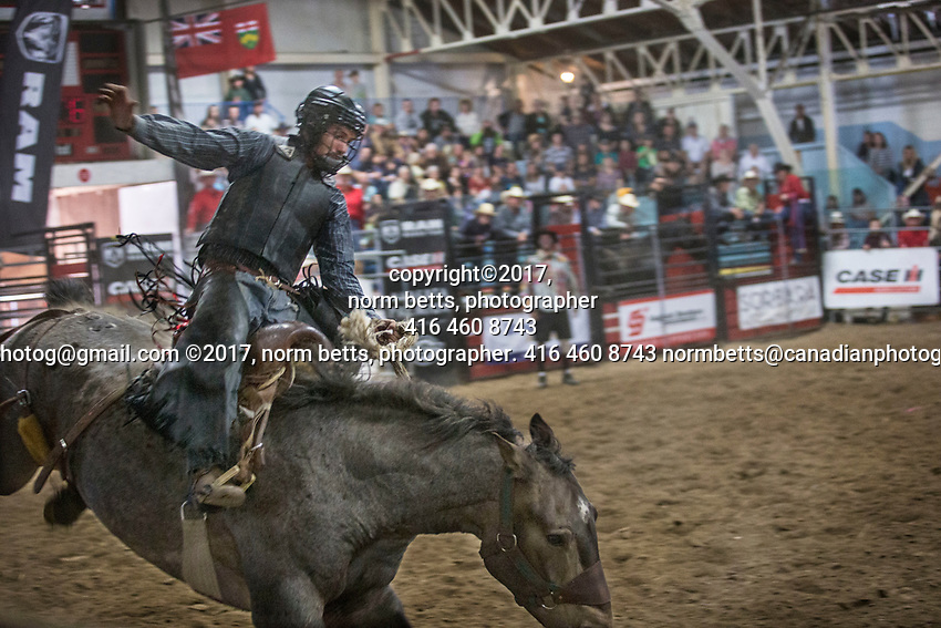 New Tecumseth- Mayor's Charity Rodeo in Alliston, Ontario, Canada, Saturday and Sunday Sept 9th and 10th<br /> photos by Norm Betts<br /> <br /> Sponsored by Mayor Rick Milne, to raise scholarship funds for local students.<br /> <br /> normbetts@canadianphotographer.com<br /> &copy;2017, Norm Betts, photographer<br /> 416 460 8743 New Tecumseth- Mayor's Charity Rodeo in Alliston, Ontario, Canada, Saturday and Sunday Sept 9th and 10th<br /> photos by Norm Betts<br /> <br /> Sponsored by Mayor Rick Milne, to raise scholarship funds for local students.<br /> <br /> normbetts@canadianphotographer.com<br /> &copy;2017, Norm Betts, photographer<br /> 416 460 8743