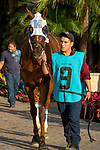 DEL MAR, CA  SEPTEMBER 1: #9 Vasilika enters the paddock before the John C. Mabee Stakes (Grade ll), on September 1, 2018 at Del Mar Thoroughbred Club in Del Mar, CA.(Photo by Casey Phillips/Eclipse Sportswire/Getty ImagesGetty Images